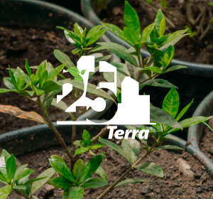<span>25 lat</span>Terra Group